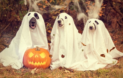 Why Halloween's going to the dogs – some of this year's tastiest tricks and treats